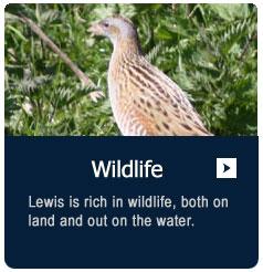 Wildlife click here