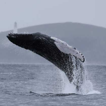 Wildlife things to do on the Isle of Lewis