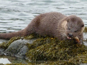 Otter wildlife attractions